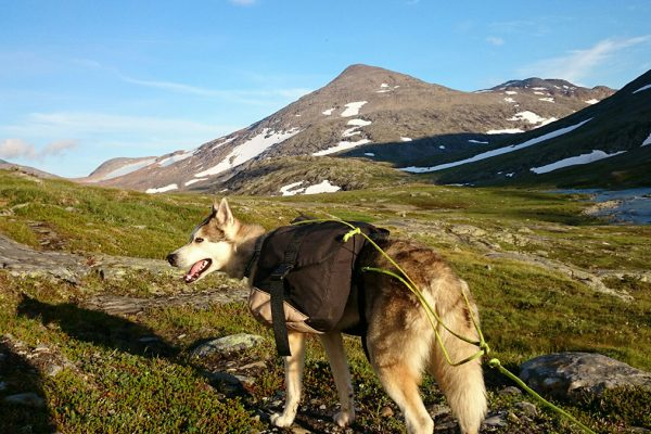 Dog in Glomdalen